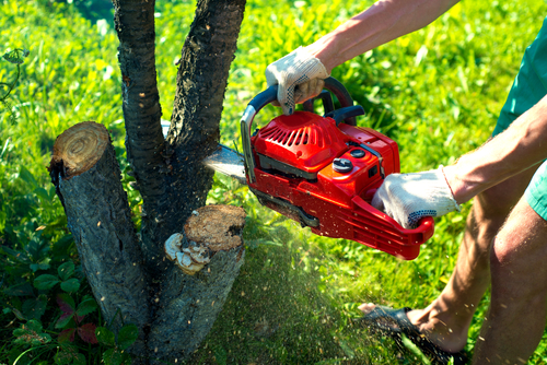 Tree Removal Frederick MD area