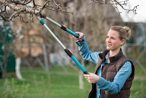 Axe Tree Pros tree pruning frederick md,